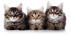 Kattbutiker på nätet