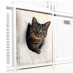 kattigloo och kattbädd