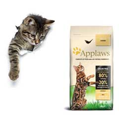 kattfoder