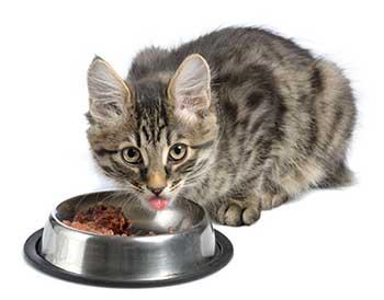 Bra kattmatskål & vattenskål katt