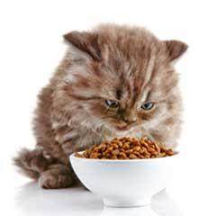 aktiveringsmatskål katt