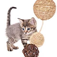 kattleksak aktiveringsleksak katt