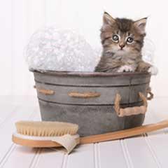 kattschampo och kattbalsam