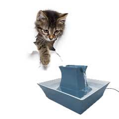 vattenfontän katt