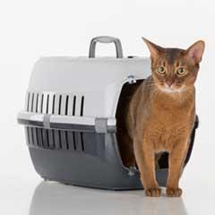 kattväska transportbur katt kattrolley