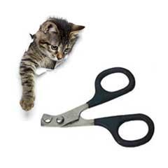 klotång katt